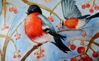 Как нарисовать снегиря на ветке рябины поэтапно – рисунки птиц для срисовки
