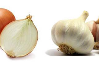 Лук и чеснок полезные свойства