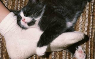 Почему кошка спит на голове у хозяина, кот ложится между ног