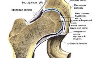 Какие кости образуют тазобедренный сустав, мышцы и связки таза