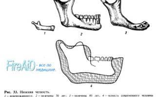 Строение челюсти человека фото с описанием – анатомия подбородка