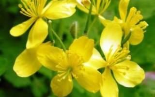 Чистотел лечебные свойства и применение в народной: чистая трава