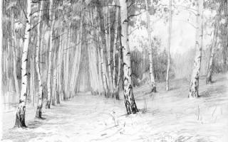 Как нарисовать дерево зимой – зимняя береза рисунок
