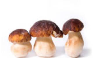 Заморозка грибов на зиму в домашних условиях: белые точки на грибах после разморозки