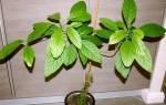 Как вырастить косточку авокадо в домашних условиях?