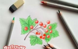 Как нарисовать кустарник карандашом поэтапно, калина рисунки