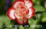 Кому Анастасие или Анастасии дательный падеж – как правильно пишется имя Настя?