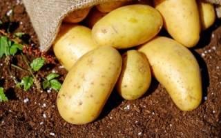 Можно ли есть картофель при похудении: почему нельзя картошку на диете?