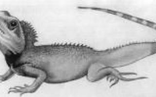 Как нарисовать ящерицу карандашом поэтапно для детей, ящерка на камне