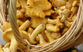 Как приготовить лисички чтобы не горчили – грибы замороженные жареные с луком