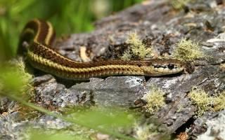 К чему снится убегать от змеи – во сне увидеть змей, что значит?