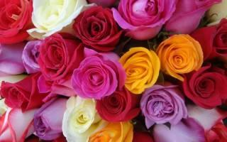 Букет из красных и белых роз, язык розочкой