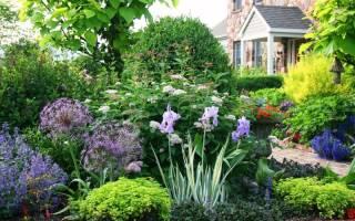 Красивоцветущие многолетние цветы в саду морозоустойчивые, северный цветок