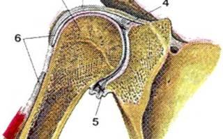 Акромиально ключичный сустав анатомия: связки классификация