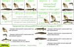 Клев рыбы на неделю в Беларуси – рыболовный календарь для белоруссии