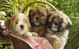 Как можно назвать маленькую собачку девочку, оригинальная кличка для собаки