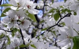 Что высаживают в огороде в мае матрешка, дачные работы
