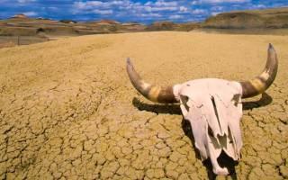 Где сейчас самая высокая температура: где на земле жарче всего?