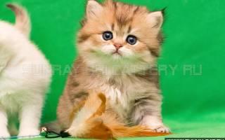 В каком возрасте можно раздавать котят: во сколько месяцев лучше брать котенка?
