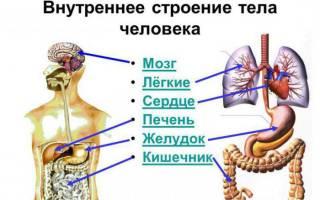 Фото органов человека где что находится женщины: строение живота мужчины