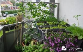 Вертикальный огород: грядка на балконе
