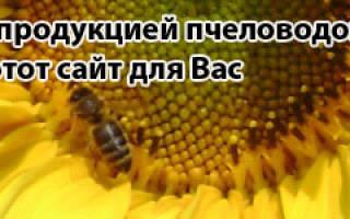 Кормление пчел, сколько нужно меда пчелам на зиму?