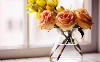 Сколько стоят розы в воде дома: аспирин в цветы