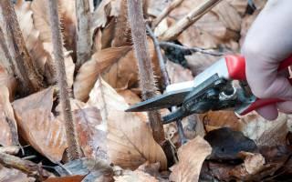 Как обрезать малину осенью видео для начинающих?