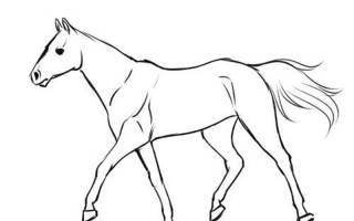 Как нарисовать бегущую лошадь поэтапно карандашом, рисунок коня