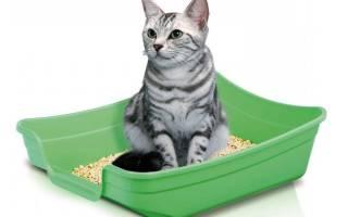 Котенок не приучается к лотку что делать: почему кошка писает не в лоток
