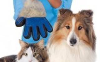 Лапомойка для собак на Алиэкспресс, алекс экспресс товары для животных