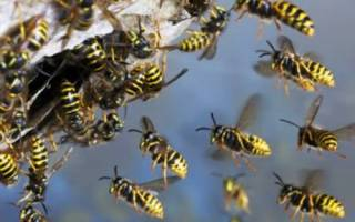 Как избавиться от пчел – как убрать пчелиное гнездо?