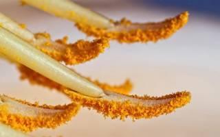 Как отстирать пыльцу Лилии с одежды?