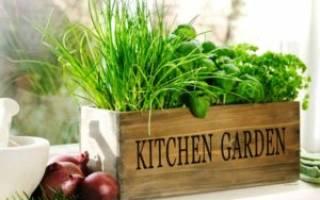 Как выращивать зелень в домашних условиях – что можно посадить дома на подоконнике зимой?