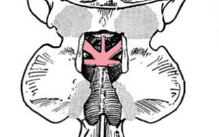 Связки атланто затылочного сустава