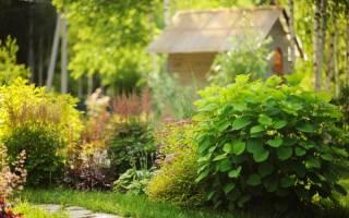 Сад огород для чайников — начинающему огороднику с чего начать