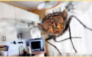 Как избавиться от мух в доме быстро?