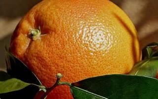 Мандарины при диете можно или нет, мандариновая диета для похудения на 3 дня