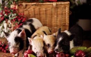 Три поросенка поделка в садик, свинка из пуговиц своими руками