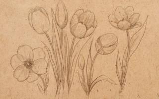 Как нарисовать тюльпан легко и красиво?