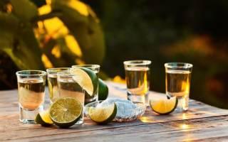 Как сделать текилу в домашних условиях – водка из кактусов