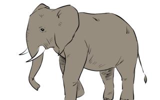 Как нарисовать слона карандашом поэтапно для детей, маленький слоник рисунок
