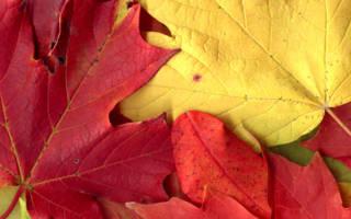 Какие поделки можно сделать из листьев: картины на тему осень своими руками