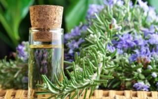 Розмарин масло полезные свойства