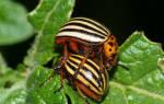 Естественный враг колорадского жука