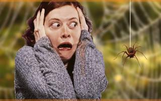 Как называется фобия боязнь насекомых – инсектофобия