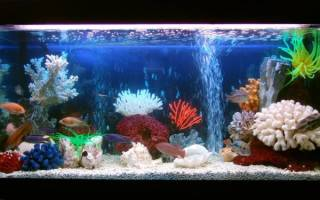 Чистка аквариума своими руками