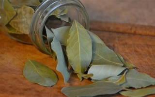 Лавровый лист от тараканов как использовать – лавр от моли