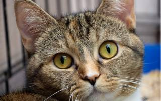 Добрые истории о животных нашедших дом