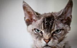 Испытание гневом — как выпустить злость наружу?